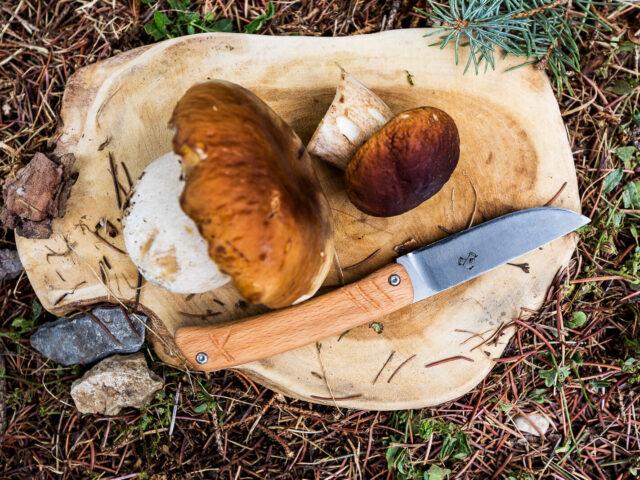 Trouver des champignons - Bolets et cèpes