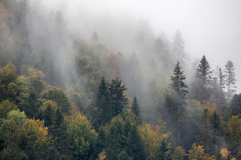 Forêt dans la brume ©Fred Petit bivouac