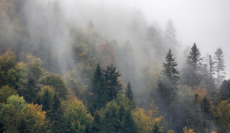 Petit Bivouac, une marque engagée pour apporter un peu de nature et d'aventure dans votre quotidien
