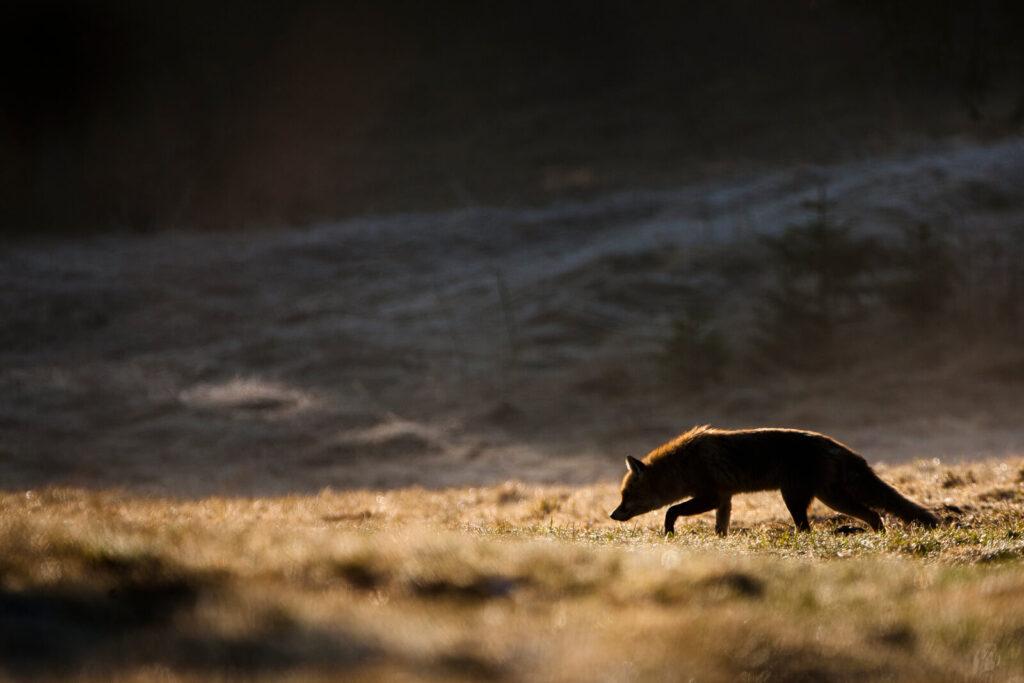 Petit Bivouac, marque engagée pour la protection de la nature et de la faune sauvage